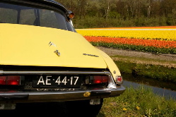DS-tulips3